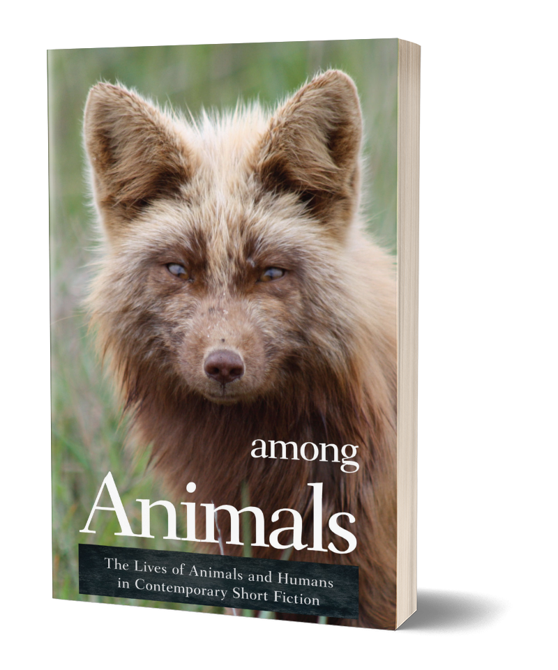 Cover Among Animals
